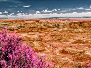 painted-desert-desert-5-arizona